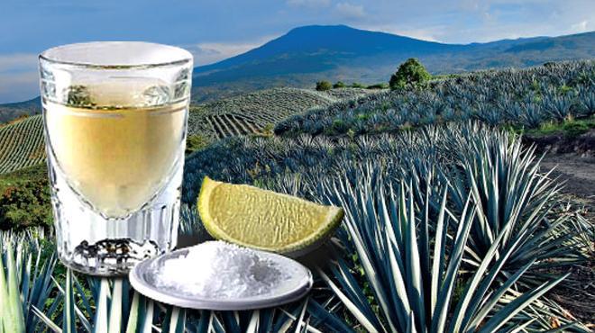 tequila campo agavero caballito de tequila en campo agavero